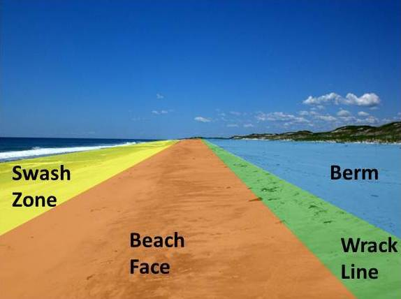 Beach sections